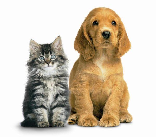 Psychic pet readings